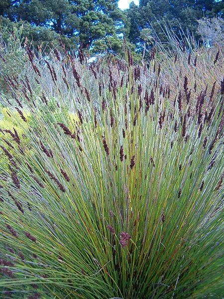 Types of ornamental grasses apple landscape jhb cc apple landscape maiden grass this variety of ornamental grass reaches a height of about 6 feet and it will spread to a diameter of about 5 feet workwithnaturefo