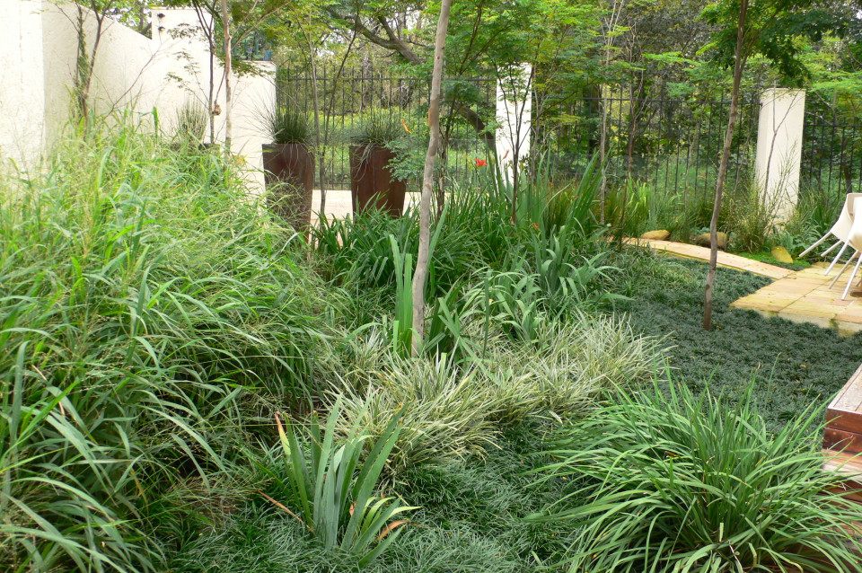 Lawns and Grasses