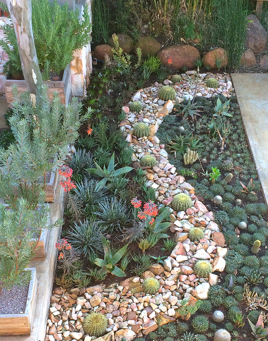 Water Wise/Succulent Gardens